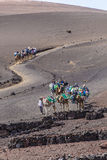 Tourists ride on camels being Royalty Free Stock Image
