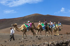 Tourists ride on camels being Royalty Free Stock Photos