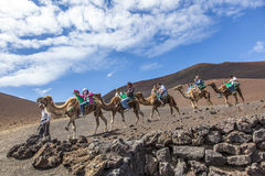 Tourists ride on camels being Royalty Free Stock Images