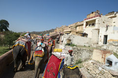 Tourists Ride an Elephant to the Amber Fort in Ind Stock Photos