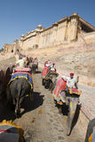 Tourists Ride an Elephant to the Amber Fort in Ind Stock Image