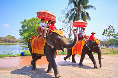 Tourists ride elephants in Ayutthaya province of Thailand Stock Photography