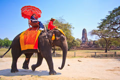 Tourists ride elephants in Ayutthaya province of Thailand Royalty Free Stock Photo
