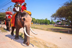 Tourists ride elephants in Ayutthaya province of Thailand Stock Image