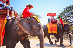Tourists ride elephants in Ayutthaya province of Thailand Stock Photos