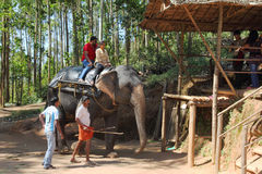 Tourists ride on elephants in the jungle Stock Photos