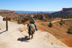 Tourists ride horses on horse trial at Bryce Canyon National Park in Utah Stock Photography