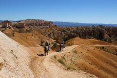 Tourists ride horses on horse trial at Bryce Canyon National Park in Utah Stock Images