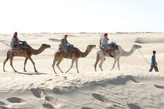 Tourists rideing camels Royalty Free Stock Image