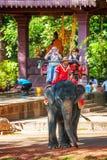 Tourists rides an elephant Stock Photos