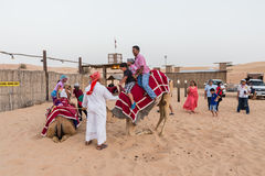 Tourists Riding Camel with Tamer in The Desert of Dubai Stock Photo