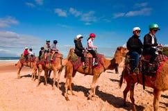 Tourists riding camels on Australian beach Stock Photos