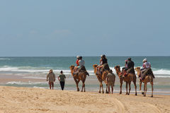 Tourists riding camels on beach. A group of tourists riding camels along a beach with surf waves and blue sky in background Royalty Free Stock Photography