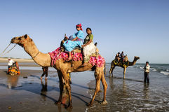 Tourists riding camels on the beach, india stock photography