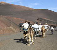 Tourists riding on camels being guided by local people through t Royalty Free Stock Photography