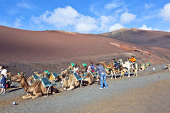 Tourists riding on camels being Royalty Free Stock Photography
