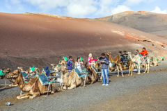 Tourists riding on camels being Royalty Free Stock Images