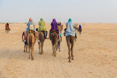 Tourists riding on camels Royalty Free Stock Photography