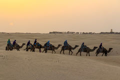 Tourists riding on camels Royalty Free Stock Photos
