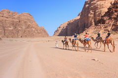 Tourists riding camels at sunset in the Wadi Rum desert, Jordan Royalty Free Stock Photos