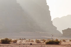 Tourists riding camels at sunset in the Wadi Rum desert, Jordan Stock Photography