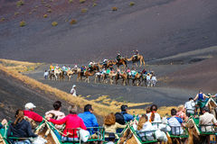 Tourists riding camels in Timanfaya National Park Stock Photography