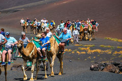 Tourists riding camels in Timanfaya National Park Royalty Free Stock Image
