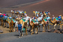 Tourists riding camels in Timanfaya National Park Royalty Free Stock Photo