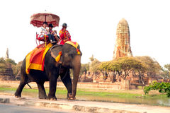 Tourists riding on the elephant at ancient temple in Ayutthaya city. Stock Image