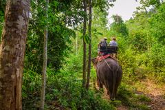 Tourists riding an elephant in Thailand Royalty Free Stock Image
