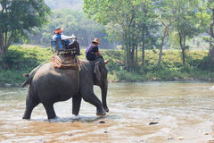 Tourists riding elephants Royalty Free Stock Images