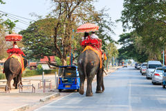 Tourists riding elephants in the old city of Ayutthaya, famous for its ancient temples. Royalty Free Stock Photo