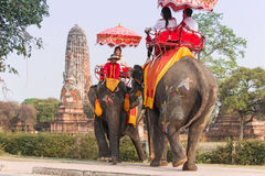 Tourists riding elephants in the old city of Ayutthaya, famous for its ancient temples. Royalty Free Stock Images