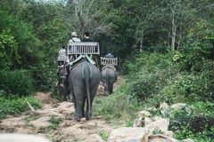 Tourists riding elephants in wild forest, on river and at Elephant Park. People sitting on elephant's backs. In beautiful green Asian landscapes. Laos. Luang stock images