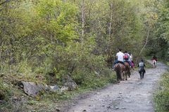 Tourists riding horses Stock Images