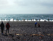 Tourists in the rocky beach of Snaefellsnes, Iceland Stock Photo