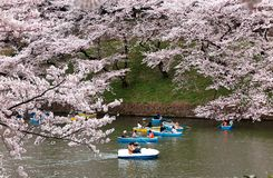 Tourists rowing boats on a lake under beautiful cherry blossom trees in Chidorigafuchi Urban Park during Sakura Festival in Tokyo. !
