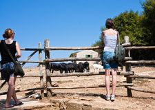 Tourists at the Safari Park. Brijuni. Croatia Stock Image