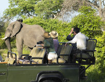 Tourists On Safari Watching Elephant. Side view of a group of tourists on safari watching elephant Royalty Free Stock Images