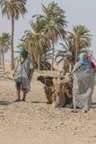 Tourists on the sahara Royalty Free Stock Photo