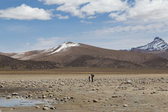 Tourists in Sajama National Park, Bolivia Stock Photography