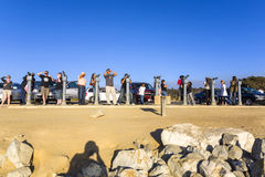 Tourists at a scenic point are watching elephant seals with binoculars Stock Photos