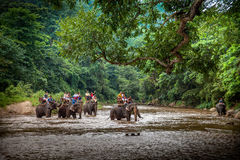 Tourists sitting on the backs of the big elephants crossing the river Stock Photo