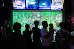 Tourists stop and observe a tank full of fish in an aquarium. These fish are swimming around in a large tank in an oceanarium.  People appear in silhouette in Stock Photo