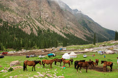 Tourists stop for a picnic near the grazing horses in a mountain valley of Central Asia Stock Images