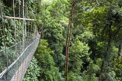 Tourists on suspended bridge on the canopy walk royalty free stock image