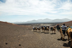 Tourists taking a camel ride Stock Photo