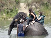 Tourists taking Elephant bath Stock Photos