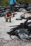 Tourists taking pictures of iguanas Royalty Free Stock Photo