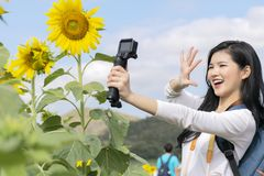 Tourists are touring the sunflower field. She was filming the video herself stock photos